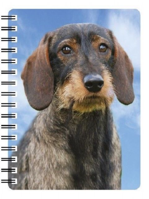 DACHSHUND ROUGH COAT 3D NOTEBOOK, PAD ORGANISER ADDRESS BOOK